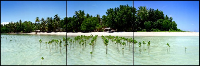 NGO Japan Overview have planted mangroves in an attempt to stop erosion on Funafala Island. Erosion casued by rising sea levels and extreme weather events caused by climate change are permanently altering the shape of Tuvalu. While global climate change may seem far-off to most, some parts of the world are already experiencing the devastating effects of global warming. The tiny Pacific Island nation of Tuvalu is one such place. Due to sea level rise, erosion, and extreme weather events it is shrinking and may eventually disappear. February, 2008. Photo: Robin Hammond